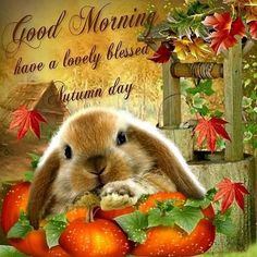 Good Morning!  Have A Lovely Autumn Day.