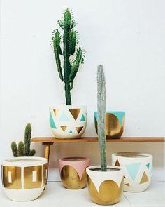 Love my pots! Cacti