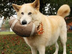 Personal fouls should all be this cute. Click the link to see more tailgating pets! http://www.peoplepets.com/people/pets/gallery/0,,20633675,00.html