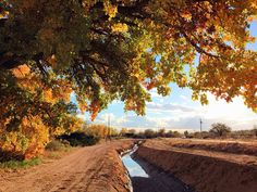 Fall in Corrales NM