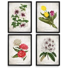 Beautiful set of four flower prints. Tulips, Rhododendrons, and more.
