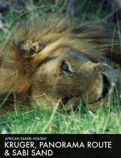 Roho Ya Chui, Swahili for Safari Holidays, Safari Adventure, I Have A Dream, African Safari, Tours, Horses, Animals, Animales, Animaux