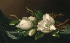 Martin Johnson Heade American, 1819-1904, Magnolias on Light Blue Velvet Cloth