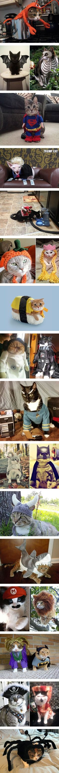 Halloween cat costumes - Tap the link now to see all of our cool cat collections! #Coolcatmakeupideas #coolhalloweencostumes