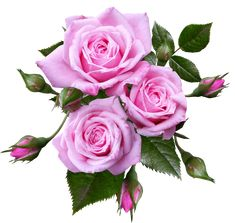 Free Image on Pixabay - Rose, Flower, Arrangement, Plant White And Pink Roses, Beautiful Pink Roses, Pink Flowers, Arrangement Floral Rose, Rose Flower Arrangements, Public Domain, Doll House Price, Photo Rose, Wine Bottle Display