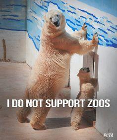 So sad. Animals don't belong in an unnatural prison habitat. :'(