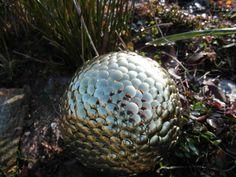 Recycled garden gazing ball #recycle #gardendecor Photo: Jayne Watkins.