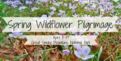 Celebrate spring beauty in the Great Smoky Mountains by participating the 64th Spring Wildflower Pilgrimage taking place April 15-19!