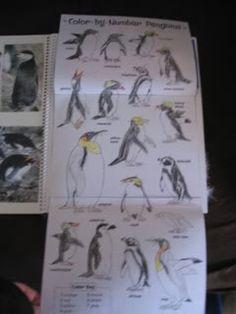 mr popper s penguin s reader s theater 2018-5-10 der von sorgen erfüllte und zerstreute mr popper bringt seine truppe schließlich in ein falsches theater,  titel mr popper's  reader's choice.