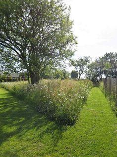 Meadow Garden, Cottage Garden Plants, Big Garden, Woodland Garden, Balcony Garden, Dream Garden, Landscape Architecture, Landscape Design, Wild Flower Meadow