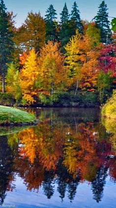 Fall reflections - the last bit of gold before the weather turns again.