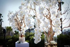 At the front of the ceremony site, two large manzanita trees will be dripping with blue-purple delphinium orchids creating a beautiful frame for the ceremony site.