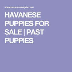 HAVANESE PUPPIES FOR SALE   PAST PUPPIES Maltipoo Breeders, Havanese Puppies For Sale, Cute Puppies, Cute Dogs, Dog Breeders, Red Poodles, Westies, Shih Tzu, Past