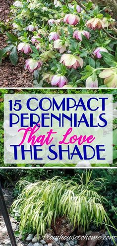 I LOVE these perennial ground cover plants that love the shade. So many pretty flowers for the garden! These beautiful compact shade plants can be used as perennial ground cover which will add interest to your garden while helping to keep the weeds down. Shade Garden Plants, Garden Shrubs, Hosta Plants, Garden Landscaping, Landscaping Ideas, Shade Landscaping, Sun Perennials, Perennial Plant, Part Shade Perennials