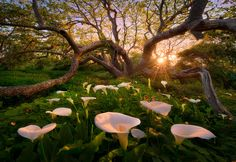 Image sunlight trees landscape forest sunset flowers garden nature grass branch blossom spring calla lilie in Admin's images album All Nature, Back To Nature, Amazing Nature, Spring Nature, Beautiful World, Beautiful Places, Beautiful Pictures, Beautiful Sunset, Beautiful Morning