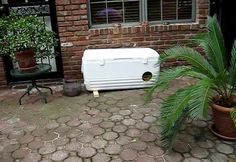 a cooler makes a great feral cat shelter (it's very well insulated!)