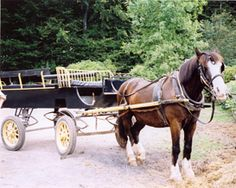 """Cara E. Moore is a writer and poet.  She has written travel articles and a collection of poetry.  The picture of """"Duke"""" from St. Fagans Folk Park in Cardiff, Wales is featured in her collection, Horizon's Place And Time Meet.  This file is a JPeg in a Winzip file."""