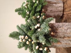 Rustic, easy Christmas centerpiece decoration out of bark and sprigs of Blue Spruce