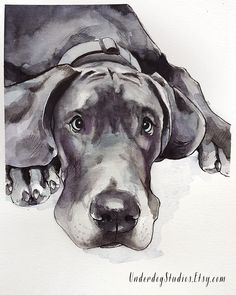 """Check out our site for even more information on """"great dane puppies""""xx. It is actually an excellent place to find out more. Watercolor Paintings Of Animals, Animal Paintings, Weimaraner, I Love Dogs, Cute Dogs, Black Great Danes, Pet Portraits, Portrait Ideas, River Painting"""