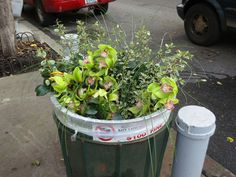 love the juxtaposition of this....orchids in a garbage can..only in NY