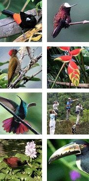 Costa Rica Birding Tour with FIELD GUIDES: Rancho Naturalista