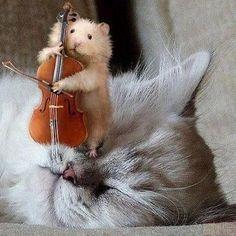 I playz you a tune....