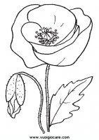 disegni_da_colorare_natura/fiore_fiori/papavero.JPG