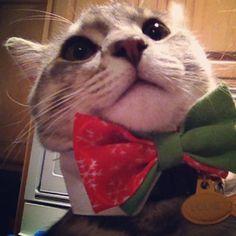Hipster cat selfie.   #cat #lolcat #meow #hipstercat #louie #mda