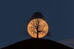 Full moon setting behind a lime tree on a hill : MostBeautiful Moon Moon, Moon Rise, Moon Art, Full Moon, Moon Photos, Moon Pictures, Angle Parfait, Best Pictures Ever, Moon Setting