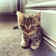 Image result for cute leopard cat