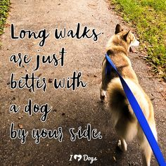 dog training,teach your dog,dog learning,dog tips,dog hacks Animal Quotes, Dog Quotes, Training Your Dog, Training Tips, I Love Dogs, Cute Dogs, Walking Quotes, Small Dog Sweaters, New Adventure Quotes