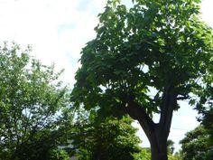 木々の緑が輝く季節になりました。2014/05