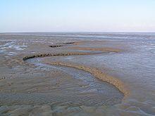 Havnær naturtype.  Vadeflade. Mudder- og sandflader blottet ved ebbe. Vade kaldes den ved ebben tørlagte jord i Vadehavet.  Med slikvade og sandvade findes der to typer af vade.  Vade er den karakteristiske landskabsform ved den sønderjyske vestkyst. Vaden er ubevokset (modsat marsken, der der bevokset), dog kan der dannes tueagtige formationer af kveller og vadegræs som partier på vaden.  Vade kan dannes på steder, hvor forskellen på ebbe (lavvande) og flod (højvande) er meget stor, således…