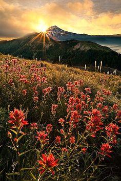 Sunrise, Mount Jefferson, Oregon photo via els #Nature