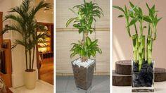 Conheça as melhores plantas para decorar o apartamento com muito charme. Saiba como inserir o verde na decoração de ambiente sem perder a elegância.