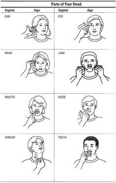 Parts of Head