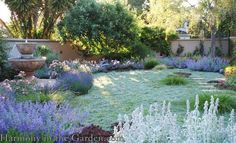 A No-Lawn Front Garden using Dymondia, Blue Springs Penstemon, Lavender, Lambs Ear, Berkeley Sedge, Feather Reed grass, and more.
