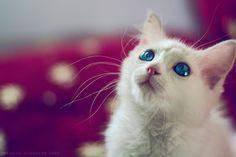 A beautiful Cat  by Ibrahim  Alnassar on 500px