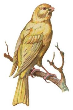 Image result for bird