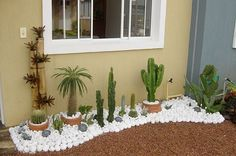 When you have identified your cactus type, you have to create the most suitable atmosphere for it. An assortment of cactus house plants appear good together. There are several different kinds of cactus combo bonsai plants. Gravel Garden, Small Garden Design, Front Yard Landscaping, Landscaping Ideas, Patio Ideas, Small Gardens, Succulents Garden, Garden Projects, Garden Tips