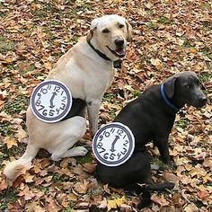 Pet Halloween Costume Contest: Watch Dogs < Pet Halloween Costume Contest - Southern Living