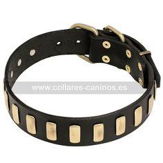 Collar de lujo para pasear perros fuertes Cane Corso diseño moderno cuero y latón - S26