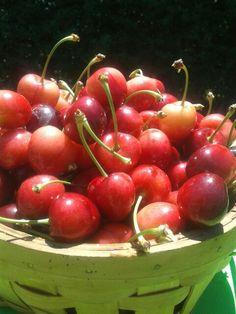 Primera producción de cerezas 2014 nov