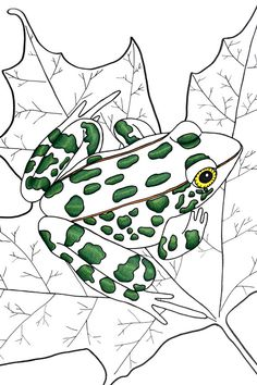 Frog 8x10 by 3LeggedDogInk on Etsy, $15.00