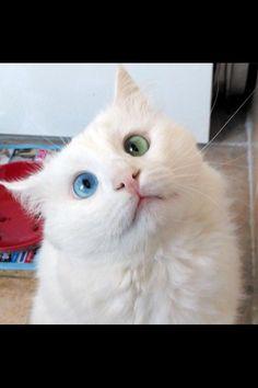 2 coloured eye