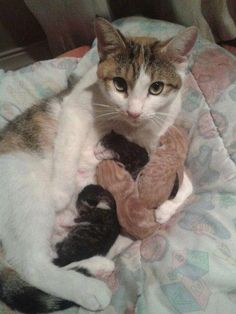A Mother's love... I wish i could have a cat with kittens one day and not have to worry about all the ones in the humane society.