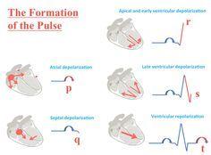 ECG Interpretation Made Simple | Basics of EKG Interpretation | Easy as EKG