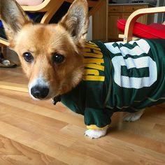 Packers game! I'm ready for some beer and cheesy bacon tots! You're sharing the tots right? #tots #cheesytots #packers #football #greenbaypackers #gopackgo #gopack #gopackers #thepack #corgi #corgination #corgicommunity #footballfan #buzzfeedcorgis #pembroke #welshcorgi #footballjersey #packersgame  #corgis #dogsofinstagram #dogsinclothes #corgisofinstagram