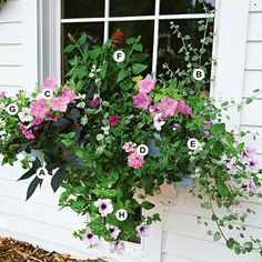 Container Gardens: Create a cottage-garden feel by using soft shades of pink and purple and plants that have loose, open shapes. Here, petunias, licorice plant, and verbena do the job perfectly. This planting grows best in full sun.  A. Sweet potato vine (Ipomoea batatas 'Blackie')--1   B. Licorice plant (Helichrysum petiolare)--1   C. Petunia 'Carpet Lilac'--2   D. Verbena 'Aztec Pink Magic'--1    E. Wishbone flower (Torenia 'Summer Wave Blue')