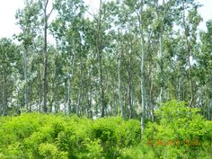 Proprietar vand 1 ha de padure la Stancuta Plants, Plant, Planets